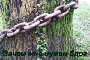 Дерево и цепь